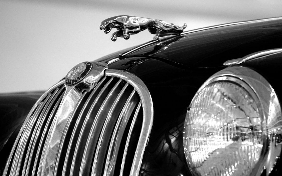 Jaguar detail